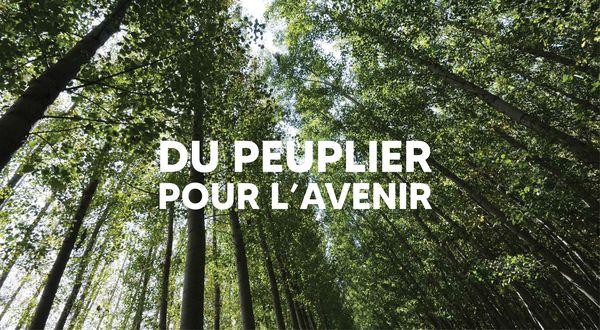du_peuplier_pour_lavenir